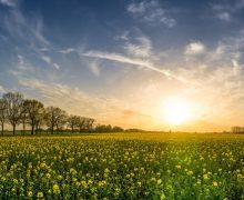 Wyjaśnienie chocianowickich rolników w sprawie oprysków
